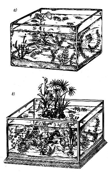 Рис. 29. Аквариумы: а - небольшой цельностеклянный с водными растениями; б - большой составной аквариум; на скале помещены: белокрыльник, циперус, осока (слева направо)