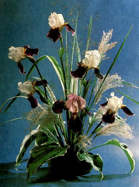 «Светящийся белизной» Ирис Вабаш, листья функии в керамической вазе