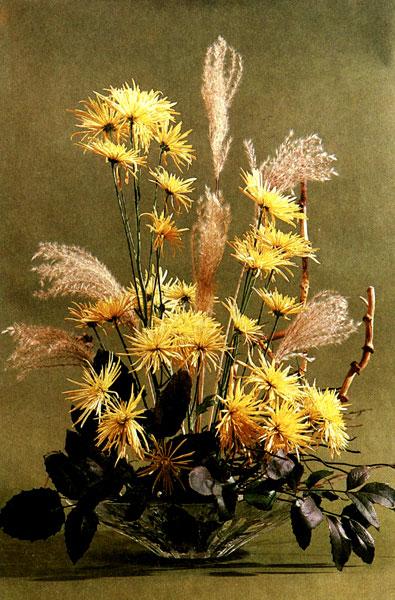 Золотая россыпь многоцветковые