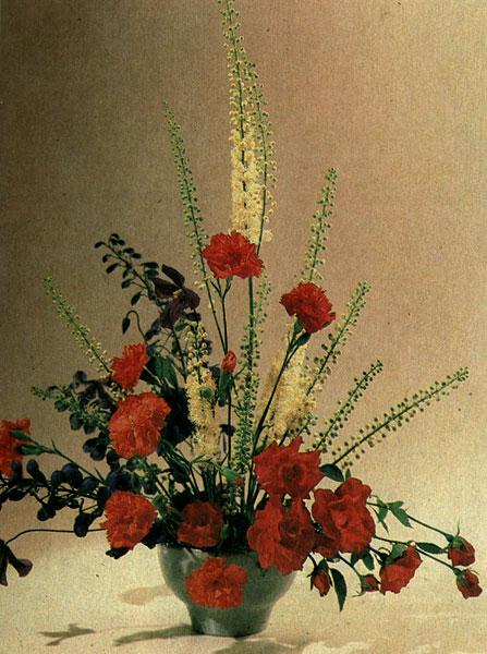 Полиантовые розы, садовая