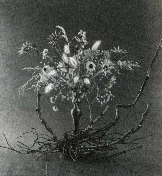 Зимнее цветение сухие цветы корни