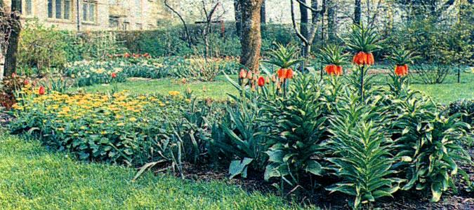 Миксбордер из весенних цветов
