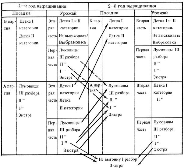 Схема отбора и выбраковки