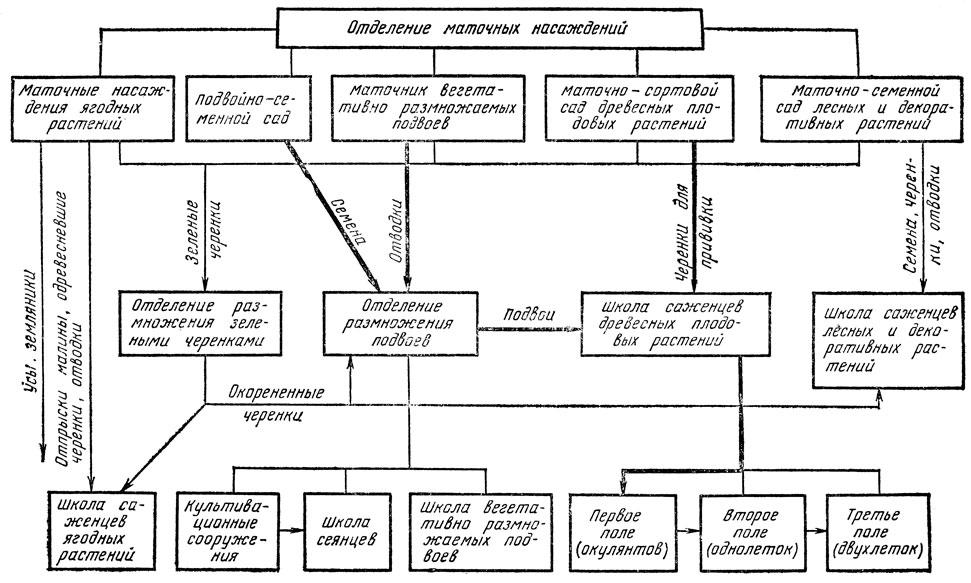 Схема лесных питомник